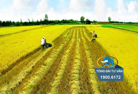 đất nông nghiệp đã nằm trong quy hoạch