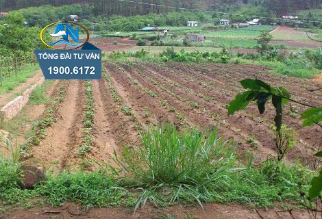 Đất nông nghiệp tự khai hoang