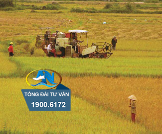 Điều kiện chuyển đổi quyền sử dụng đất nông nghiệp