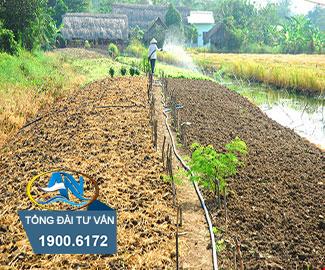 Diện tích tách thửa tối thiểu đối với đất trồng cây lâu năm