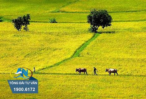 Thuê đất nông nghiệp
