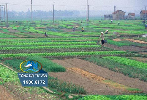 Thủ tục chuyển đổi quyền sử dụng đất