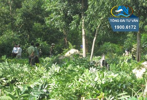 thu hồi đất rừng sản xuất
