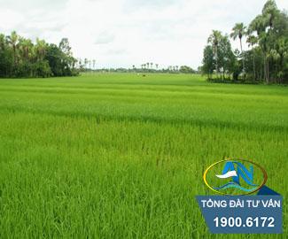 đất nông nghiệp không có trong giấy chứng nhận