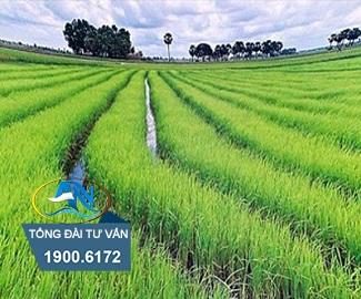 chuyển nhượng đất nông nghiệp