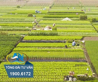 Góp vốn bằng quyền sử dụng đất