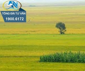 Công ty cổ phần có được mua đất trồng lúa