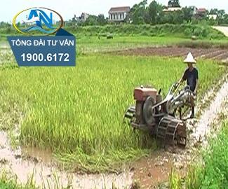 Nhận chuyển nhượng đất trồng lúa