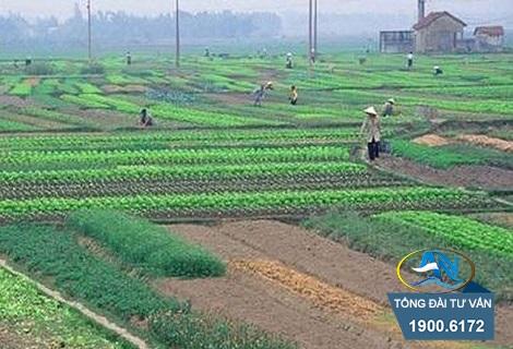 Luật thu hồi đất nông nghiệp